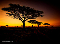 Acacias At Dawn Serengenti Tanzania  3signed
