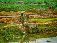 Bike, Crops, and Cemetery Vietnam